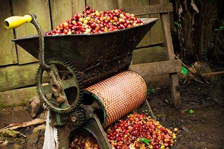 Kaffeekirschen-Pulper - Verarbeitung von Kaffeekirschen